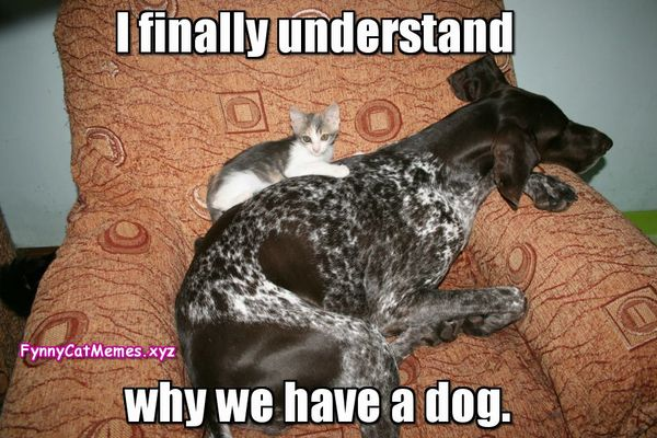Funny pet memes 2017 pictures