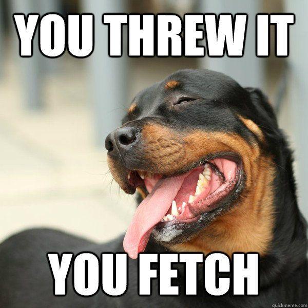 Funny silly dog meme joke