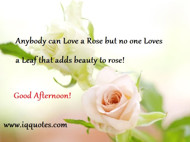 20 Good Afternoon Love Quotes Sayings & Images