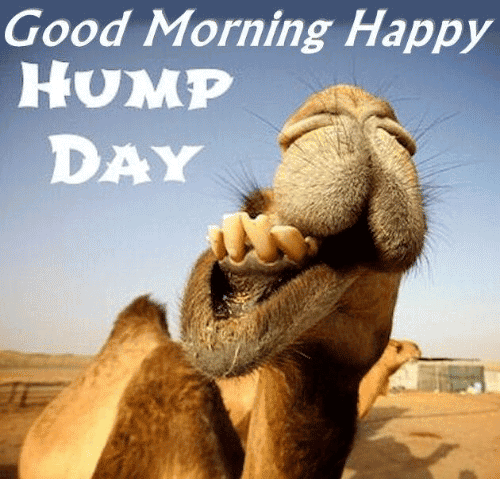 Good MOrning Happy Hump Day
