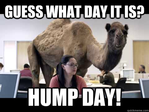 Guess What Day It Is Hump Day!
