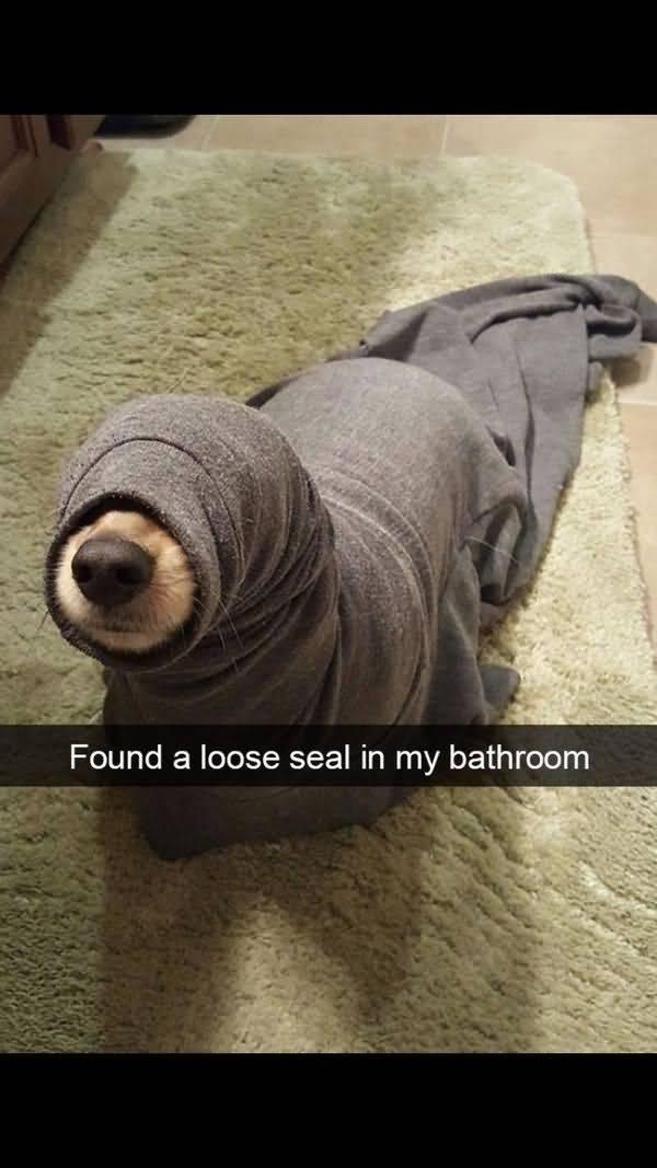 Hilarious funny dog memes image