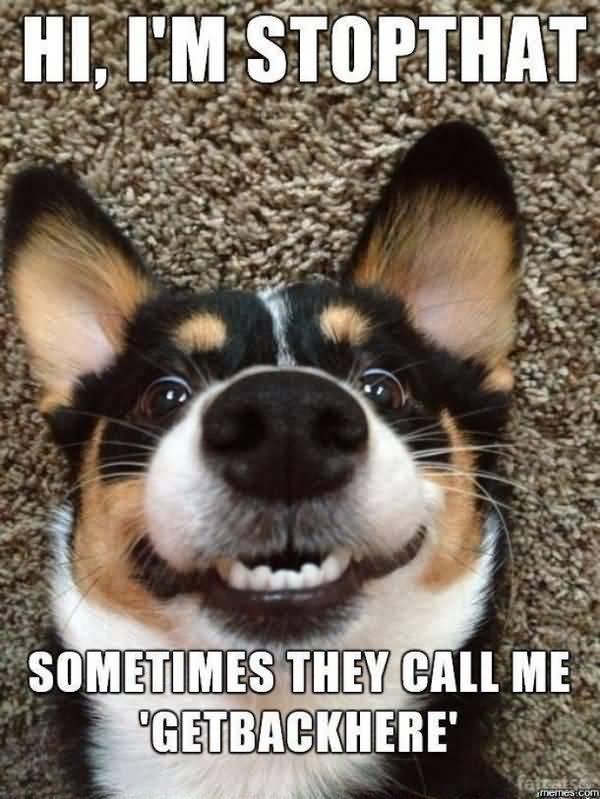 Hilarious funny dog memes picture