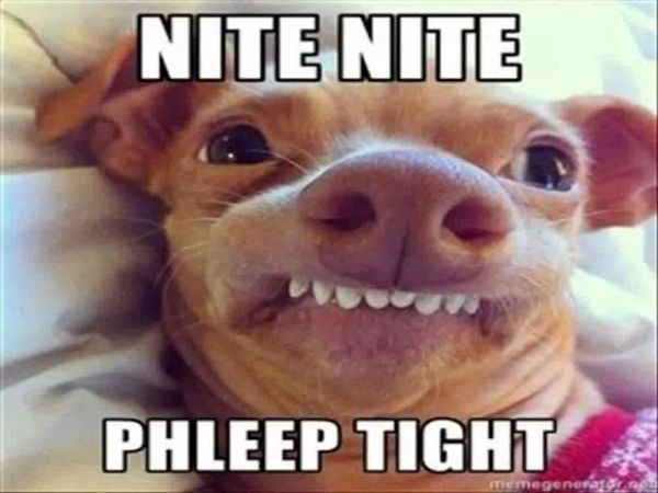 Hilarious funny dog memes pictures