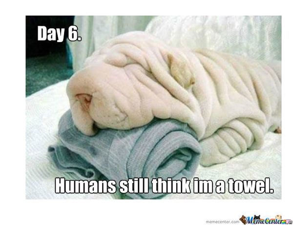 Hilarious funny puppy memes pictures