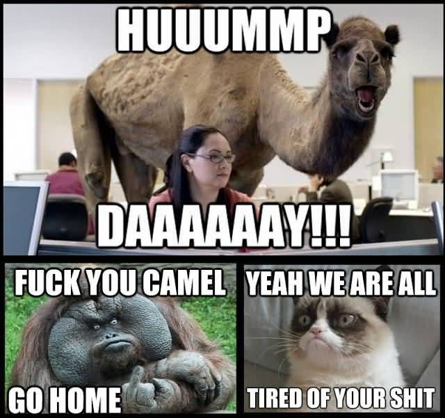 Huuuummp Daaaay!!! Fuck You Camel Go Home Yeah We Are All Tired Of Your Shit