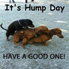 It's Hump Day Have A Good One!
