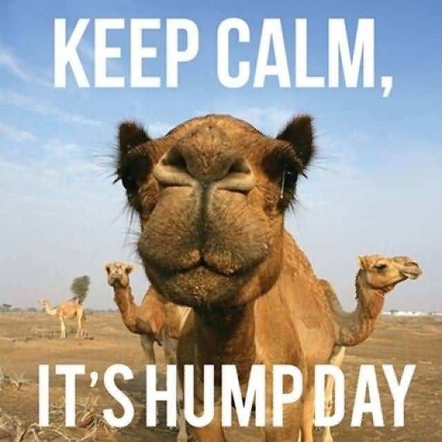 Keep Calm It's Hump Day
