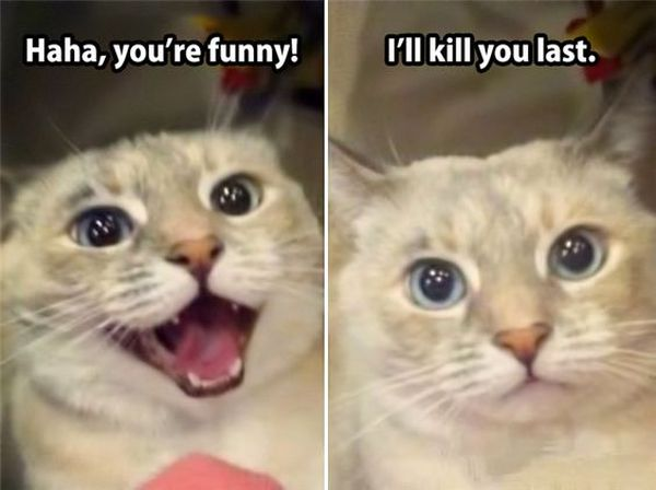 Laughing Kitty Meme Picture