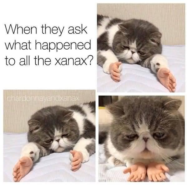 Silly Cat Memes Joke