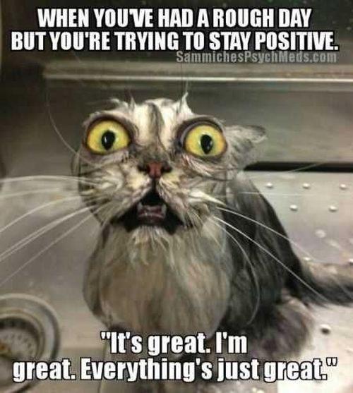 Wet Cat Meme Joke Memes