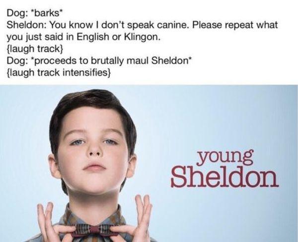 Young sheldon meme photos