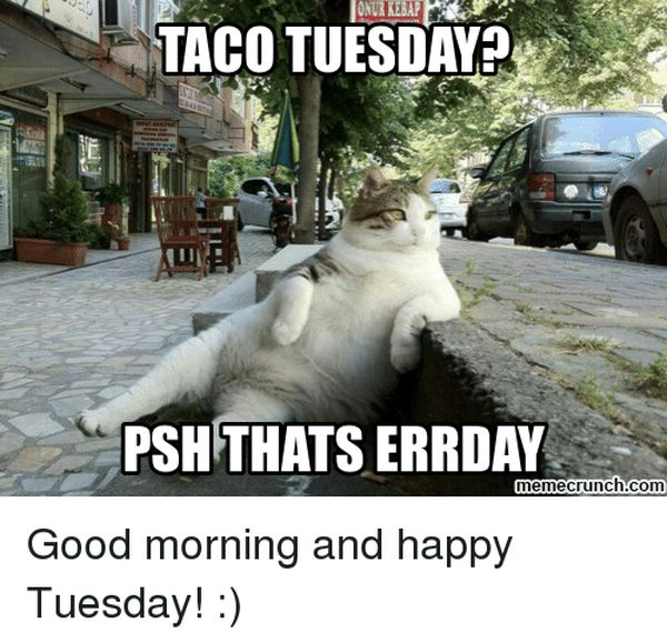 amazing good morning tuesday meme pictures