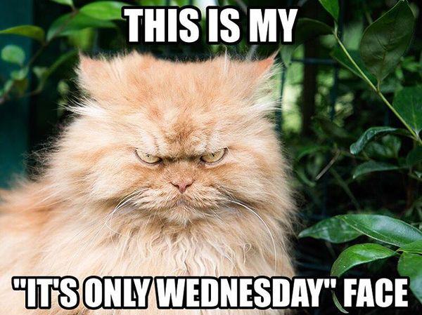 funny wednesday memes joke
