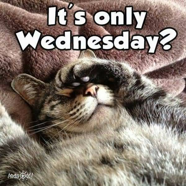 wednesday cat meme funny