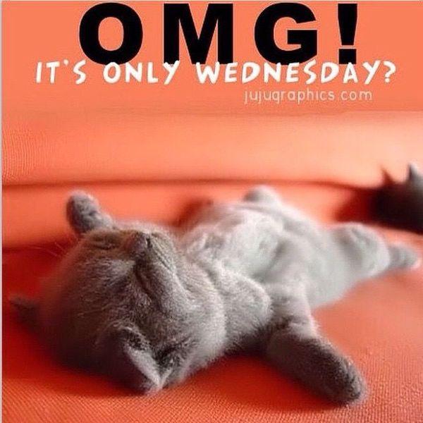 wednesday cat meme jokes