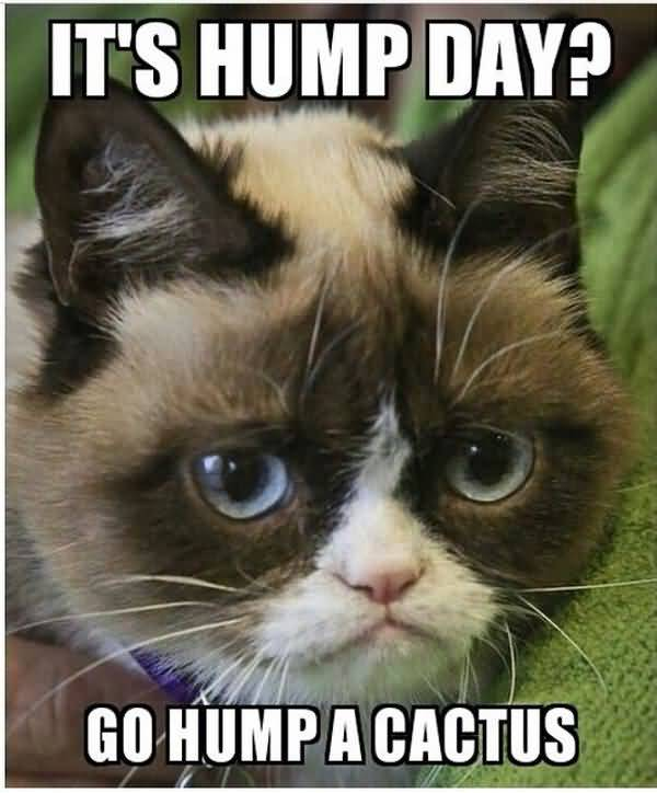 wednesday cat meme pictures