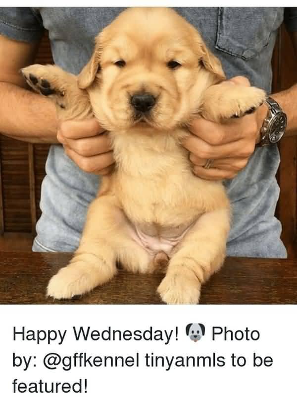 wonderful wednesday animal meme images