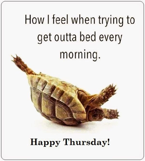 wonerful thursday pictures funny