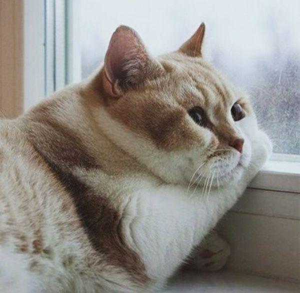 Amusing pics of fat cats joke