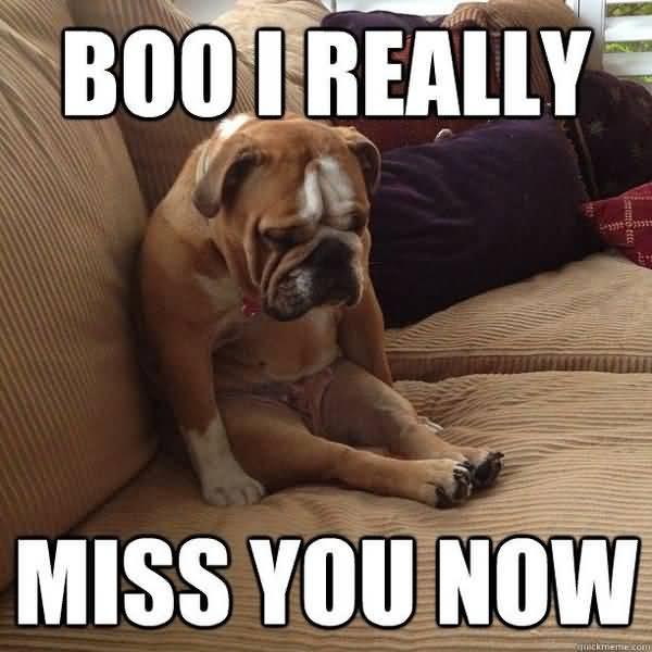 Amusing sad dog miss you meme joke