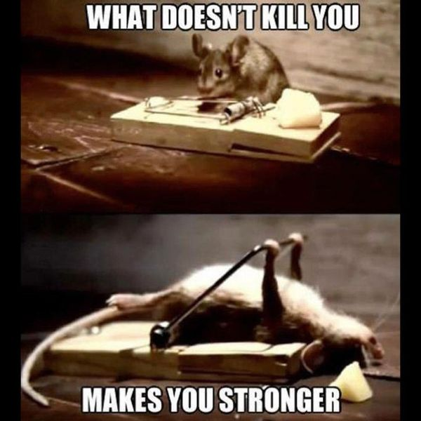Funniest What Does Not Kill You Motivational Meme Picture