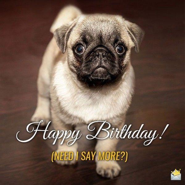 Funniest Happy Birthday Pug Meme Jokes