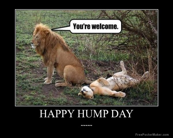 Funniest hump day meme dirty pictures
