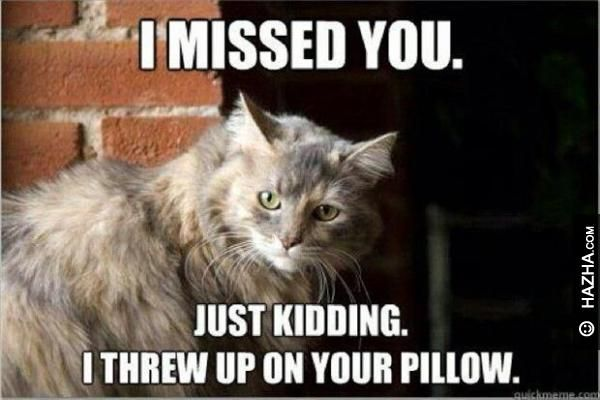 Funniest kidding miss you meme photo