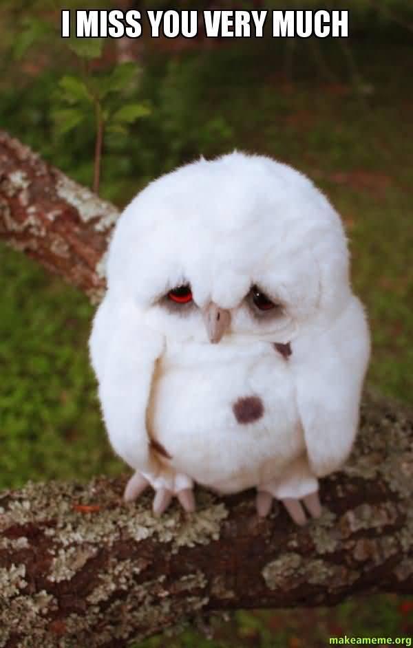 Funniest little owl miss you meme joke