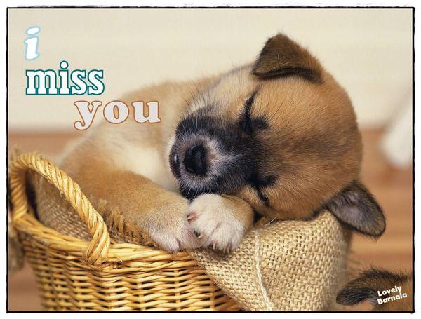 Funniest little puppy miss you meme jokes
