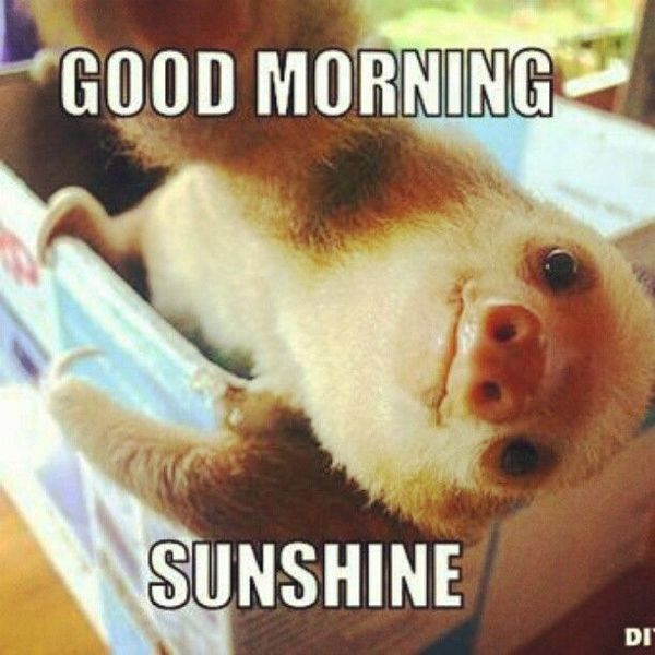 Funny Good Morning Sunshine Meme Joke