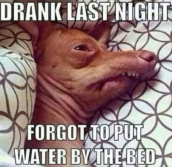 Funny bad hangover funny pictures joke