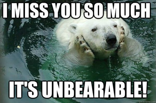 Funny bear miss you meme photo