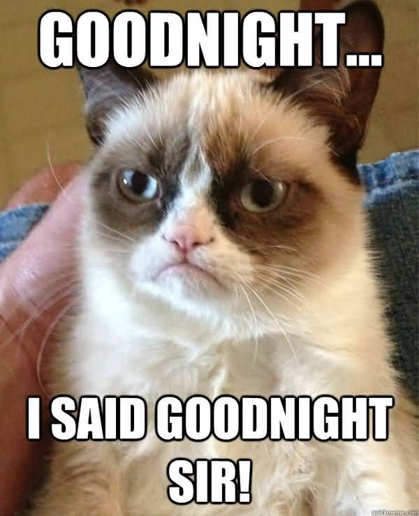 Funny best good night cat meme photo
