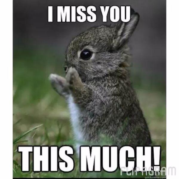 Funny bunny miss you meme jokes