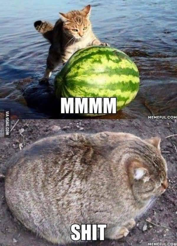 Funny fat kitten meme photo 50 Top Cat Meme Pictures Images and Photos