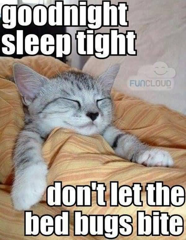 Hilarious cute nighty night meme photo