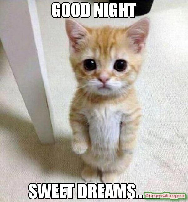 Hilarious cute sweet dreams meme picture