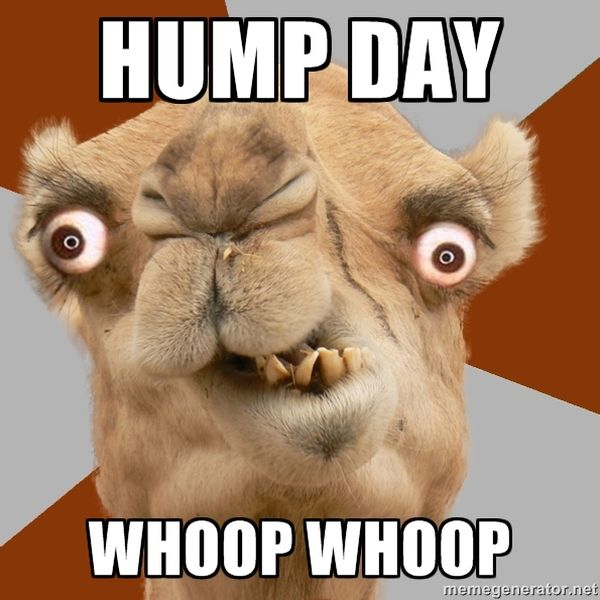 Hilarious hump day pictures memes