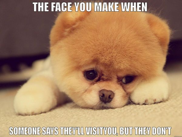 Hilarious puppy miss you meme image