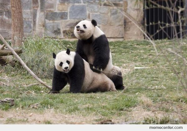 Panda sex joke