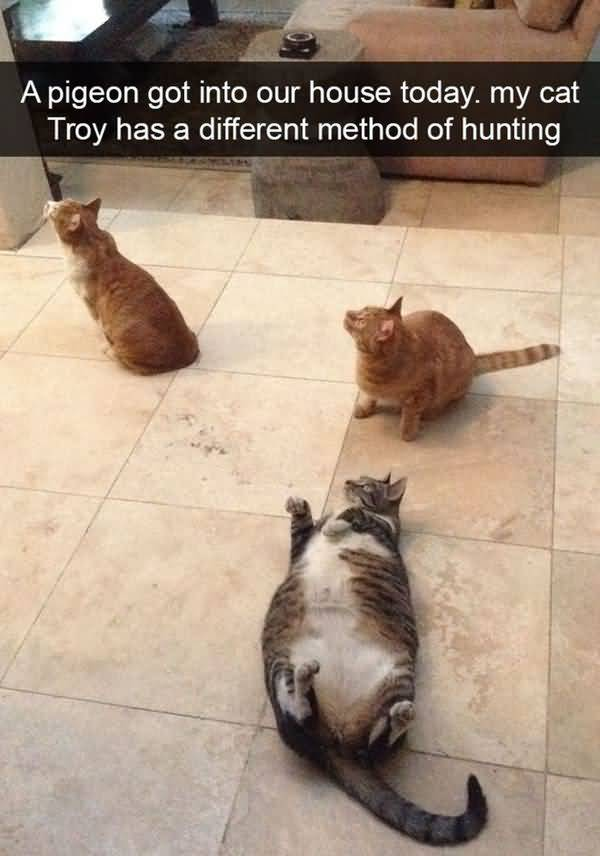 Humrous funny fat cat pictures captions photo