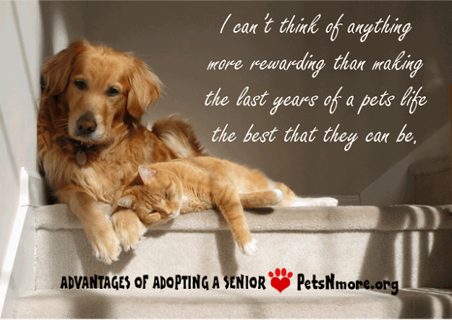Love Animal Quotes 60 QuotesBae Best Love Animal Quotes