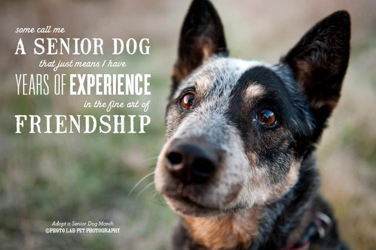 Quotes About Dogs And Friendship 03