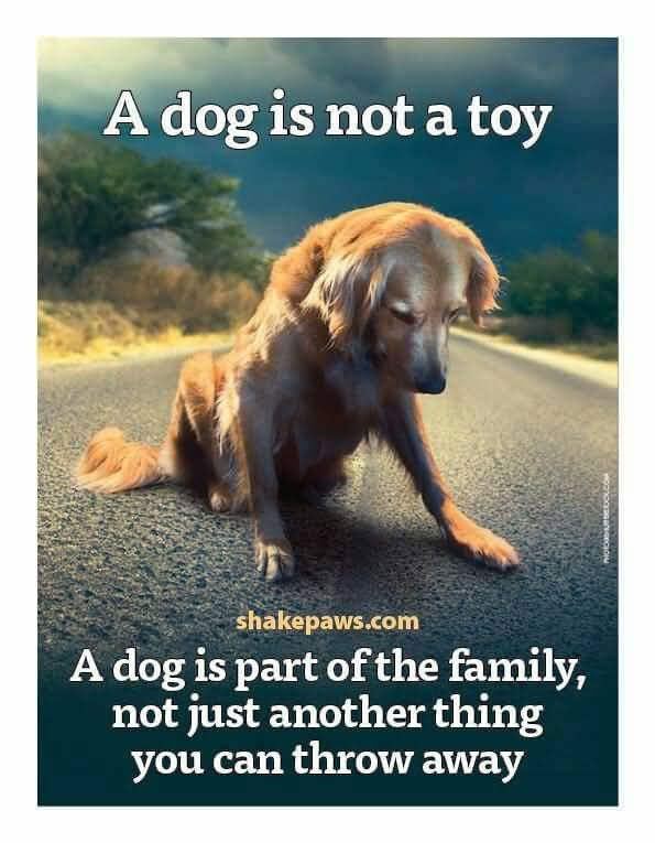 Quotes About Dogs And Friendship 19