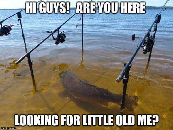 Very funny carp fishing meme photo