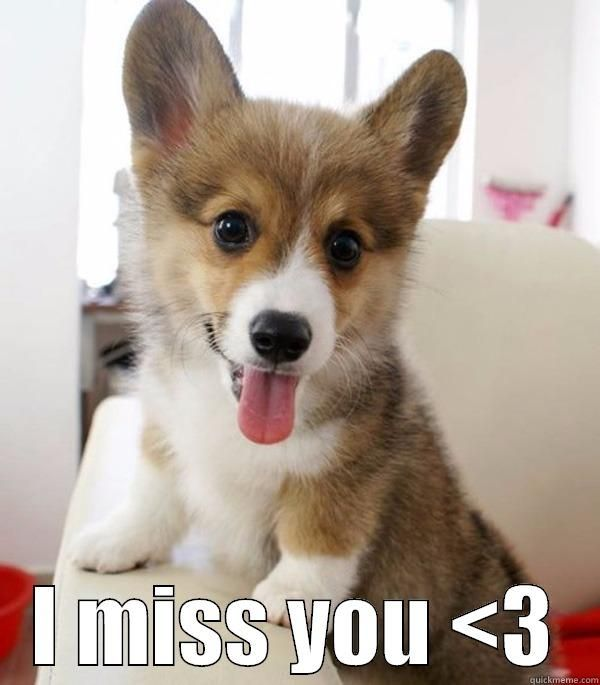 Very funny dog miss you meme image
