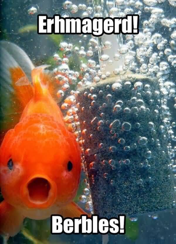 Very funny fish pictures with captions joke