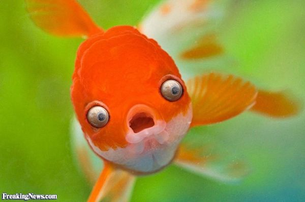 Very funny pictures of fish joke